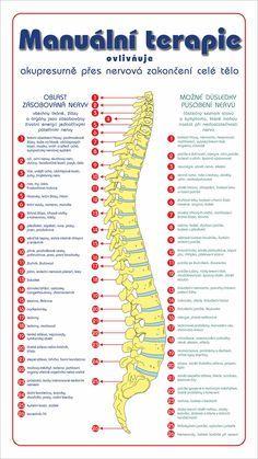 Obrázek páteře s popisem obratlů a vztahů k orgánům a psychice. + cvičení na páteř Yoga Anatomy, Body Issues, Real Bodies, Rogue Fitness, Healthy Lifestyle Tips, Yoga Routine, Herbalife, Excercise, Health Fitness