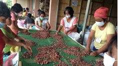 CacaoWorkers-01-24-2014.jpg (640×360)
