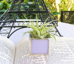 Lavender Opal Stained Glass Tillandsia Air Plant by MoreThanColors, $18.00