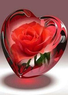 хх Beautiful Love Images, Love Heart Images, Beautiful Rose Flowers, Beautiful Nature Wallpaper, Amazing Flowers, Dove Pictures, Heart Pictures, Rose Flower Wallpaper, Heart Wallpaper