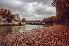 ROME. This looked really nice autumn leaves covered the surface of the Riverside with the bridge as the backdrop.