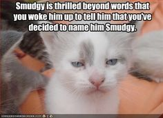#funny #cute #kittens #cat | Collection of top 30 funny cat #pictures