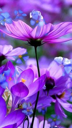 628 Best Purple Flowers Images Purple Flowers Flowers