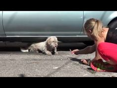Homeless dog transformation Street Dogs Need Our Help - Street Dog Rescue - YouTube