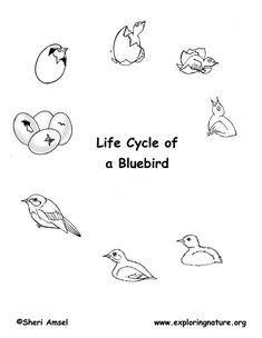 life cycle flip books exploring nature educational resource education pinterest ciencia. Black Bedroom Furniture Sets. Home Design Ideas