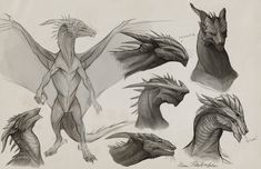 Sapient Dragon Sketches by ~KatePfeilschiefter on deviantART