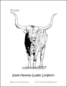 longhorn coloring page.html
