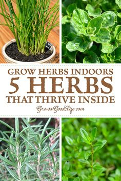 Grow Herbs Indoors: Even if you don't have outdoor gardening space, there are plenty of herbs that you can grow indoors successfully on a sunny windowsill. Apartment / Wohnung / Home Grow Herbs Indoors: Even if you don't have outdoor gardening space