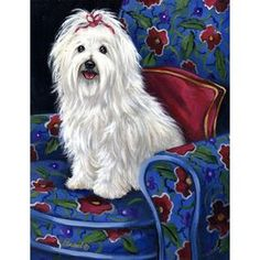 Precious Pet Paintings X Coton De Tulear Spring Flag L Coton De Tulear, Maltese Dogs, Dogs And Puppies, Doggies, Puppy Cut, Spring, Animal Paintings, Acrylic Paintings, Painting Art