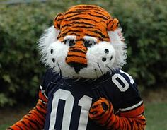 Aubie first appeared as a cartoon character created by Phil Neel in 1959. Aubie's look changed through the years and evolved into the beloved mascot in 1979. Aubie came to life at the Southeastern Conference basketball tournament in 1979.