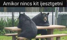 Black Bear, I Laughed, Funny Animals, Laughter, Jokes, Lol, Comics, Retro, Cats