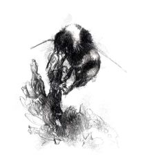 Sketch A Day, Bee Bee, Animal Drawings, Sketches, Characters, Spring, Animals, Etsy, Art