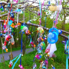 The pacifier tree, Slottsskogen, Gothenburg
