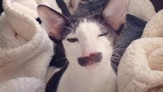 18 Cats Who Don't Even Look Real