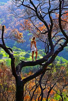 I love to climb trees to see the world at a birds eye view