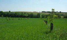 L'agroforesterie ouvre de nouveaux horizons aux agriculteurs pour produire de manière plus écologique #agroforesterie #agriculture #écologie