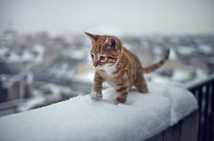 snow kitty!