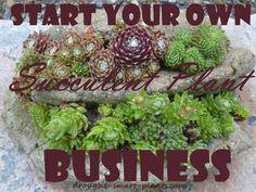 Start Your Own Succulent Plant Business; learn how here... http://www.drought-smart-plants.com/start-your-own-succulent-plant-business.html?utm_content=buffer27ce2&utm_medium=social&utm_source=pinterest.com&utm_campaign=buffer#axzz3cTr0DuIo
