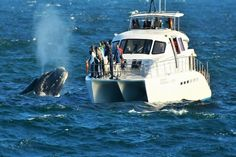 Whale Watching with Southern Right Charters in Hermanus, South Africa Campervan Rental, Whale Watching Tours, Charter Boat, Adventure Activities, Once In A Lifetime, Countries Of The World, South Africa, Southern, Whales