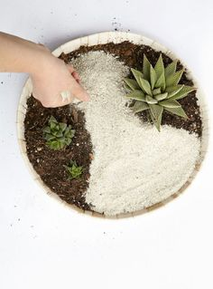 Required Reading: Plant Craft by Caitlin Atkinson