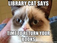 Library cat says time to return your books - Angry Cat Meme | Meme ...