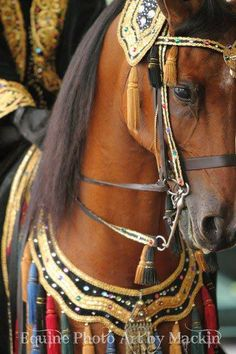 "Arabian Native Costume - I've shown in these classes at horse shows in a costume in deep Mediterranean Blue with gold and beaded trim and appliques for myself and for my horse,   ""Amistad's Drifter"" ++.  It is an amazing feeling to adorn that costume...and ride like the wind.....he was a part of my heart and I was a part of his...."