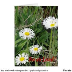 You are Loved Sub-alpine Daisy Blank Card by Zazzle designer Calethia Baker.  A card for Valentine's day or any time of the year. (scheduled via http://www.tailwindapp.com?utm_source=pinterest&utm_medium=twpin)