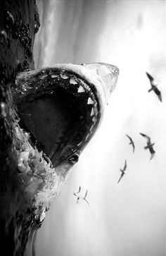 Absolutely amazing picture. Can't wait for Shark Week.