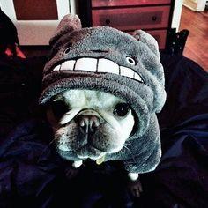 Cosplay (Dog in Tototo suit ... kawaii nee )