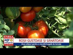Sfaturi pentru o cultură bogată de roșii cu gust - YouTube Planting Seeds, Avocado, Vegetables, Youtube, Gardening, Farming, Anna, Vegetable Gardening, Farm Gate
