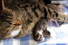 Die Geburt unserer Katzenbabies | www.youdid-design.de