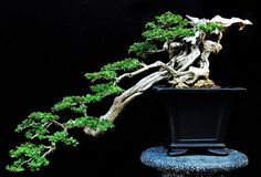 Nature ~ Bonsai Japan / Japanese Antiques : More At FOSTERGINGER @ Pinterest ⚫️