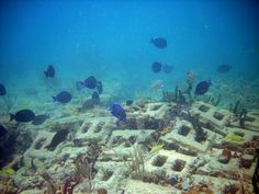 Part of the artificial reef off Hollywood Beach. The bricks are significant to keep the cement culvert under the bottom of the sea. The holes make a great habitat for the fish to hide in and avoid their predators.