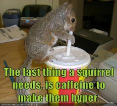 The last thing a squirrel needs, is caffeine to make them hyer.