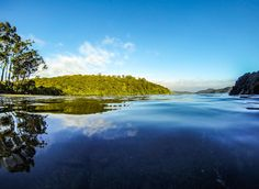 The Rakiura Track (Stewart Island) #greatwalker