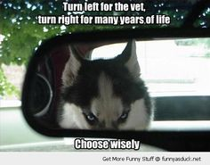 Turn left for the vet, turn right for many years of life, choose wisely