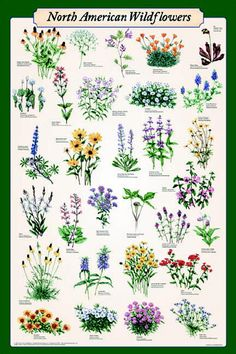 wildflowers with names - Google Search