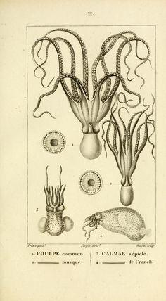 Plates - Manuel de malacologie et de conchyliologie ... - Biodiversity Heritage Library 1825