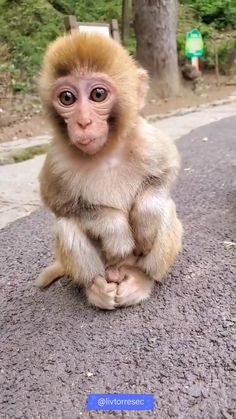 Little Monkeys, Cute Little Animals, Cute Funny Animals, Cute Dogs, Funny Monkeys, Baby Animals Pictures, Funny Animal Pictures, Animals And Pets, Cute Baby Monkey