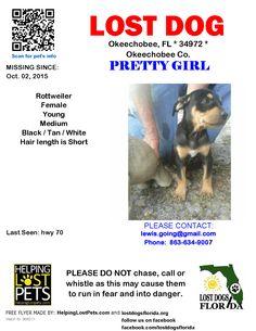 Lost Dog - Rottweiler - Okeechobee, FL, United States