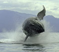 What kind of whale is that..?