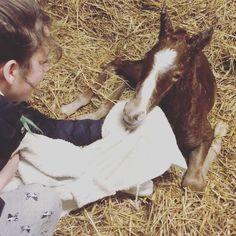 new little man  #foal #newborn
