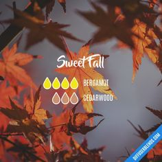 Sweet Fall Essential Oils Diffuser Blend ••• Buy dōTERRA essential oils online at www.mydoterra.com/suzysholar, or contact me suzy.sholar@gmail.com for more info.