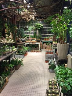 LOVE the idea of having my own green room spilling with plants and flowers!...