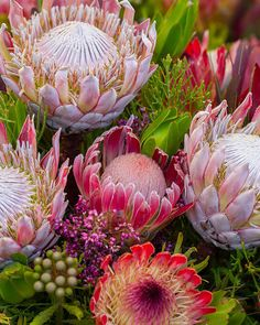 Protea Art Print by Cuson. All prints are professionally printed, packaged, and shipped within 3 - 4 business days. Choose from multiple sizes and hundreds of frame and mat options. Flor Protea, Protea Art, Protea Flower, Protea Bouquet, Dendrobium Orchids, Delphinium, Kansas State Flower, Flower Power, Tropical Flowers