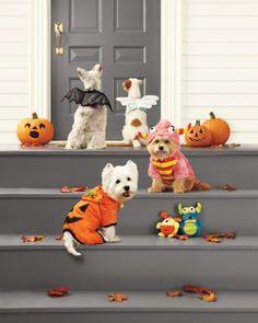 Martha Stewart Halloween Pet Costumes