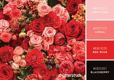 101 Color Combinations to Inspire Your Next Design | The Dots
