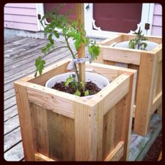 Built this planter out of pallets.