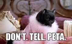 27 Times Salem Saberhagen Was Your Spirit Animal Oldies But Goodies, Tv Quotes, Mood Quotes, Salem Sabrina, Sabrina Cat, Salem Cat, Salem Saberhagen, Mood Pics, Reaction Pictures