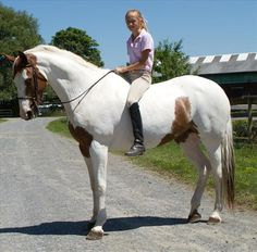 Paint Thoroughbred. This horse is absolutely stunning. Would be a dream to own. Can i have himmmm